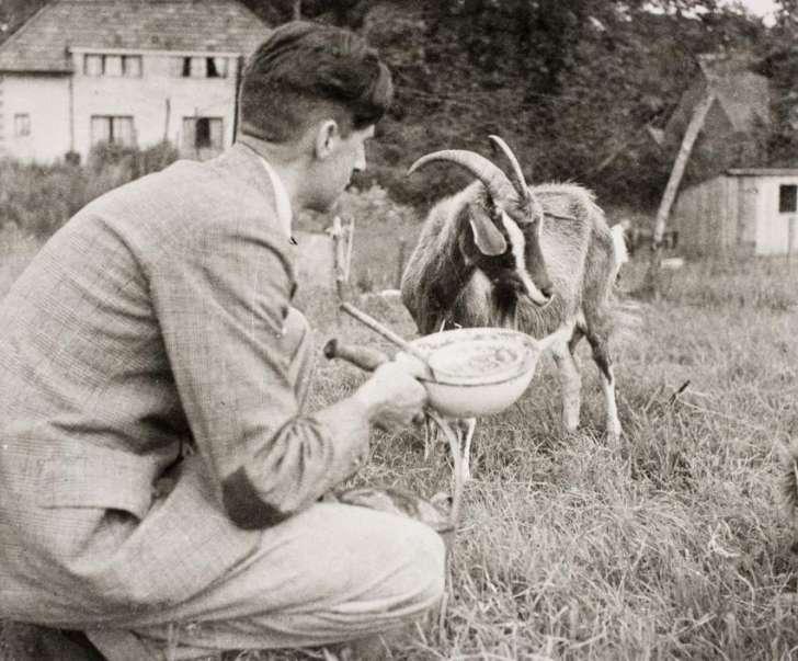 Оруэлл и коза